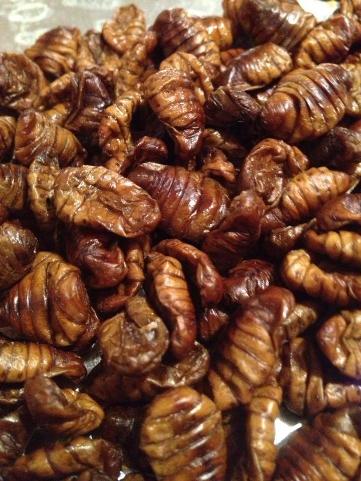 Roasted Silkworm Pupae. Photo: Edible Bug Shop